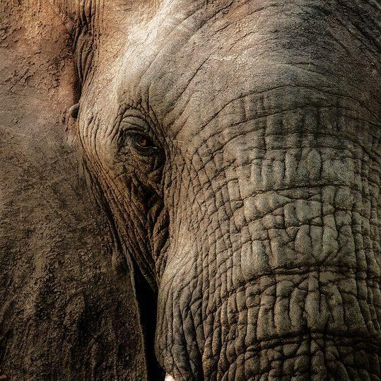 elephant-FREE Pixabay 2810955_640